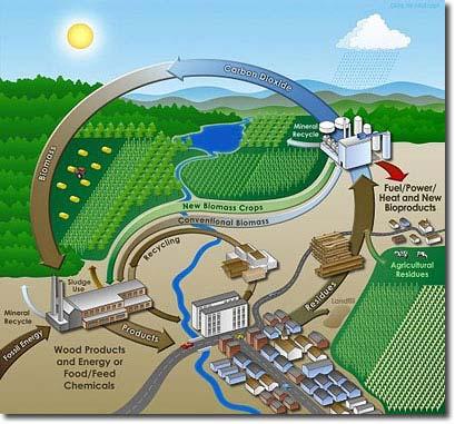 Chu kỳ năng lượng sinh học