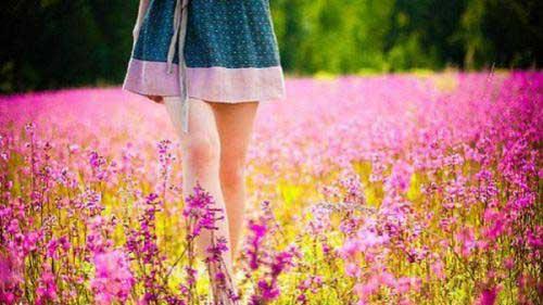 http://megafun.vn/dataimages/201012/original/images409677_1282361219_Giacmohoa.JPG